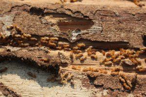 termite inspection shakopee mn